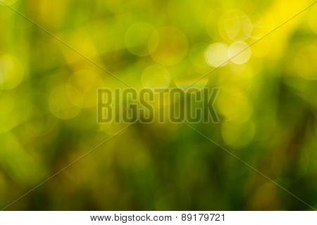 Yellow  Leaf Blurred