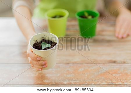 people, gardening, organic, planting and profession concept - close up of woman hand holding pot with sprout