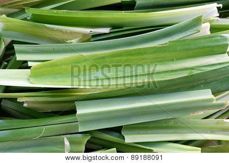 Pandanus Leaf Split Texture