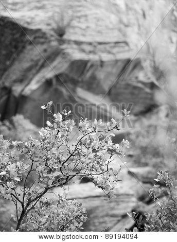Artistic black and white landscape photo