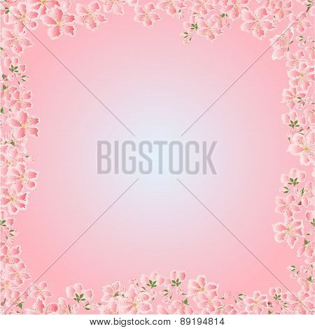 Seamless Texture Cherry Blossoms Spring  Vector