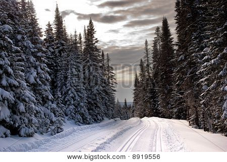 Cross-country ski trail in Quebec, Canada