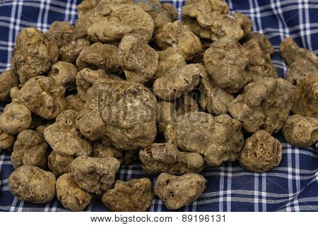 White And Black Truffles In Italy