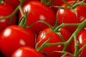 picture of plum tomato  - detail of cherry tomatoes - JPG