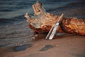 picture of driftwood  - Message in a bottle propped on driftwood log with New Year message for 2016 - JPG