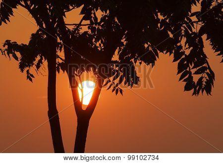Tree Over Rising Sun