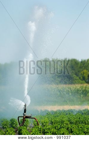 Irrigation Spout In A Field
