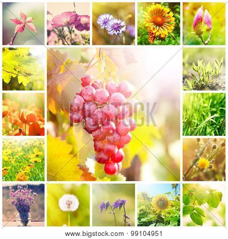 Beautiful nature collage