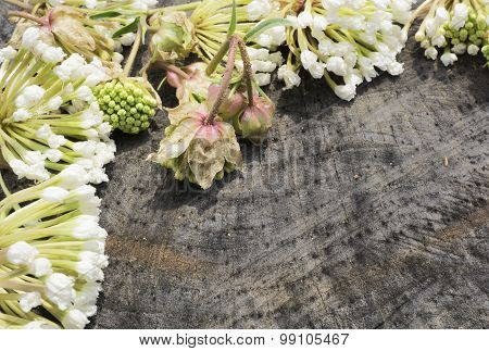 Small White Flowers Arranged on a Wood Background