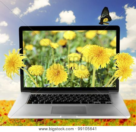 Laptop with nature wallpaper on screen on poppies field against blue sky background