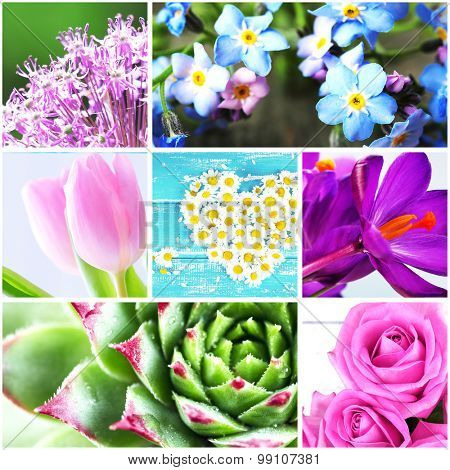 Collage with beautiful flowers