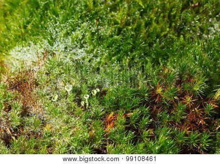 Macro Of Forest Floor