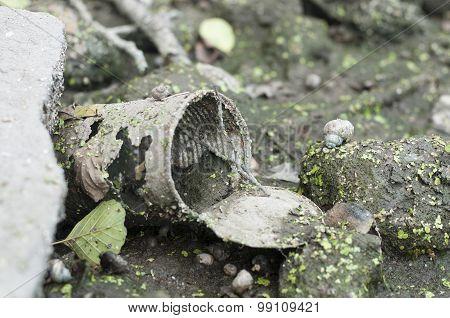 Rusty Tin Dumped In Swampy