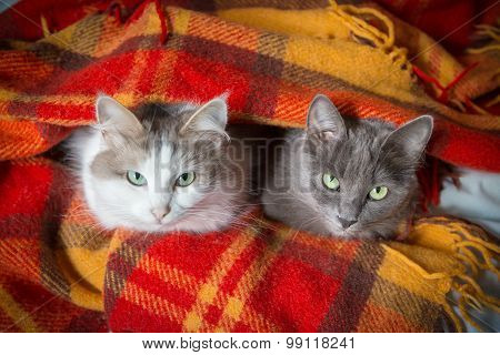two cats under orange plaid