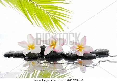Three  frangipani and set of stones with palm on wet