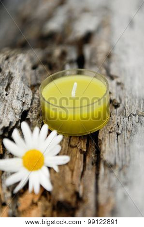 gerbera with yellow candle on old wood