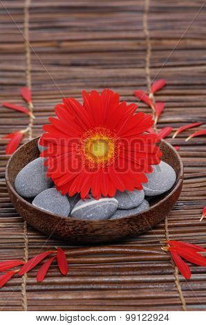 Red gerbera with gray stones in wooden bowl on mat