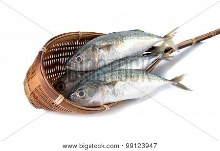 Fresh Whole Round Indian Mackerel In Bamboo Dipper On White Background