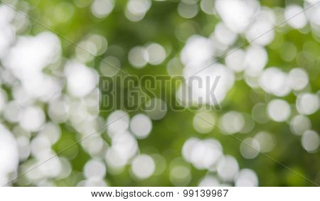 Green And White Color Bokeh Background.
