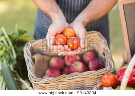 Close up view of farmer hands showing three tomatoes