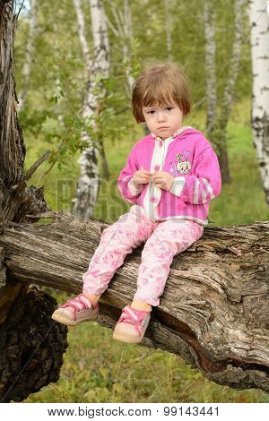Girl Sits On An Old Tree