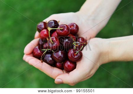 Freshly  Cherries