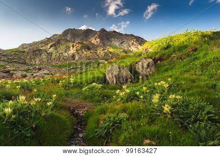 Swiss Alps, Grand Saint Bernard, summer landscape