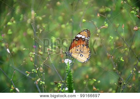 A Butterfly In The Grassland