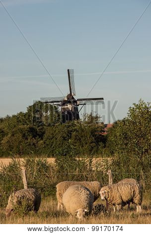 Flock of sheep with windmill