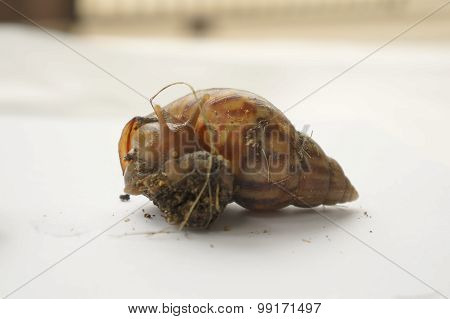 Snail Slow Animal Closeup Walk Nature Slime Concept