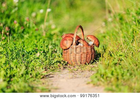 Basket of mushrooms in green forest