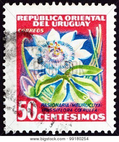 Postage Stamp Uruguay 1954 Passion Flower, Flowering Plant