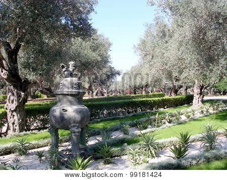 Akko Bahai Gardens Old Olive Trees 2003
