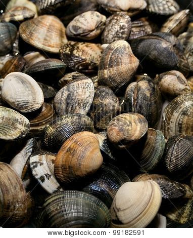 Clams Vongole