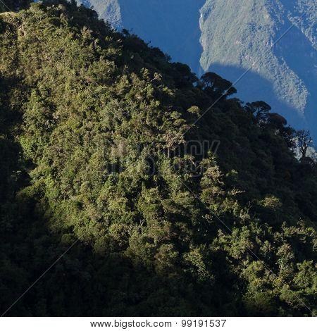 Cotojocha Reserve, Ecuador Cloud Forest