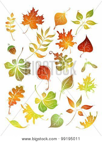 Vector Set Of Autumn Leaves.