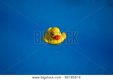 Rubber duck in the swimming pool