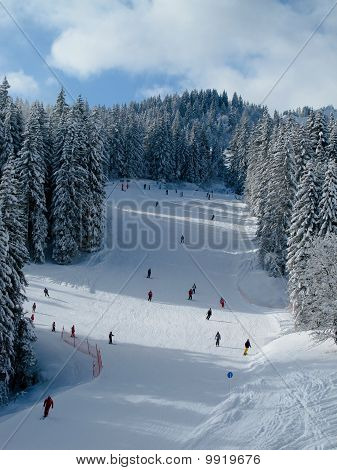 Snow Covered Ski Piste With Many Skiers Surrounded By Trees On B