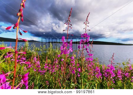Meadow in Alaska