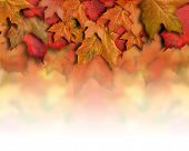 stock photo of fall leaves  - An orange - JPG