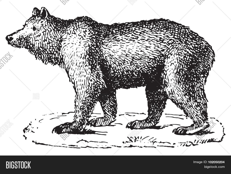 Vintage bear graphic