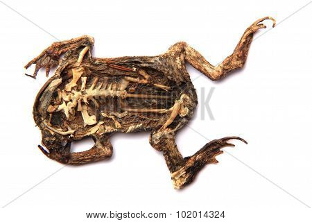 Dead Frog Isolated
