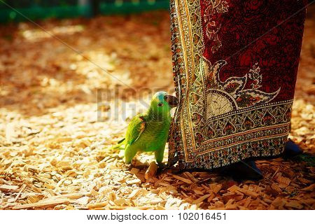 Green parrot and red female ornamental cloth.