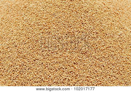 closeup of a pile of amaranth seeds