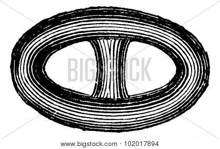 Link in the Brunton chain vintage engraving. Old engraved illustration of Brunton chain link. Trousset encyclopedia.