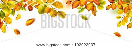 Autumn Leaves Border On White Background