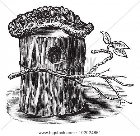 Parakeet Nest made of Hollow Tree Trunk, vintage engraved illustration. Trousset encyclopedia (1886 - 1891).