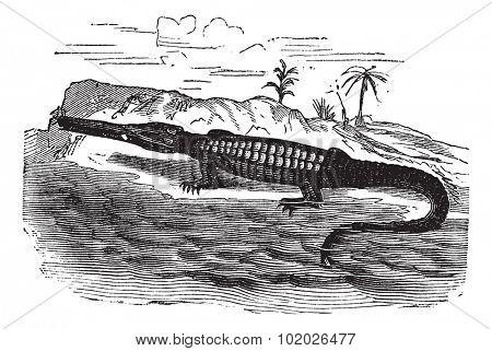 Teleosaurus, vintage engraved illustration. Trousset encyclopedia (1886 - 1891).