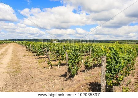 Overlooking A Vineyard And The Sky