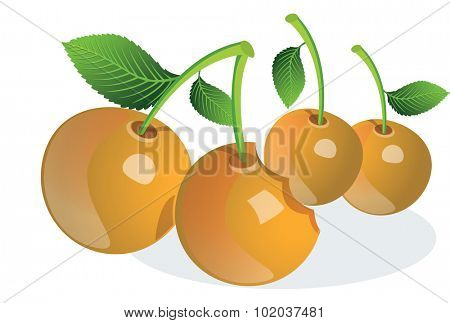 Cherry or Prunus sp., Fruit, Orange, Whole and Bitten, vector illustration